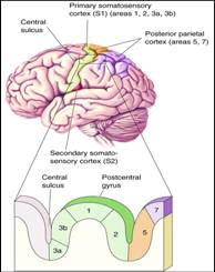 Percepción del dolor en el síndrome de comportamiento autolesivo